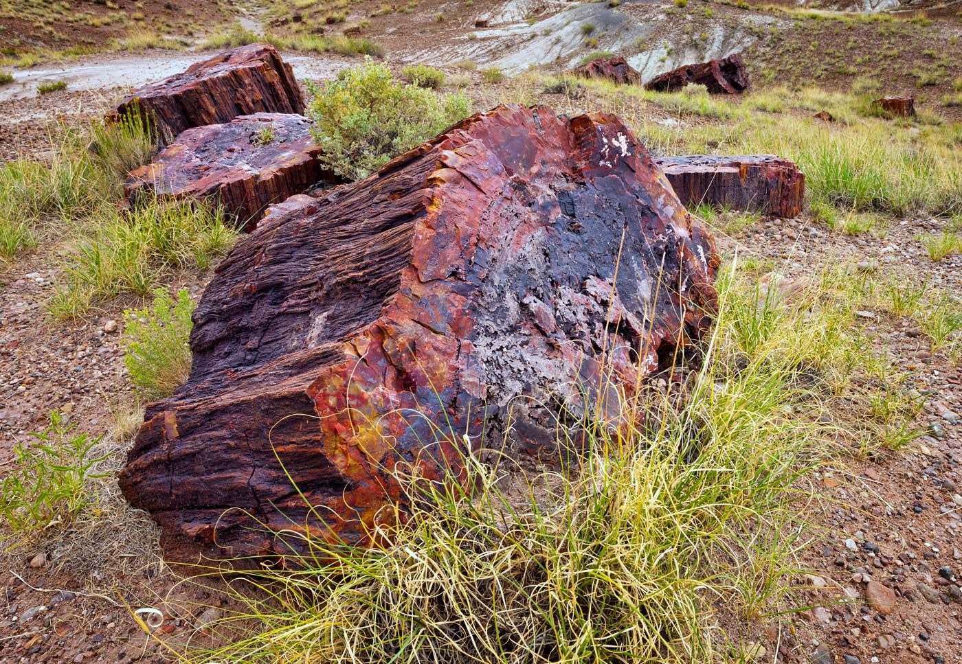 Petrified-Forest-National-Park-ABP-Giant-Logs_Rainbow-Forest.jpg