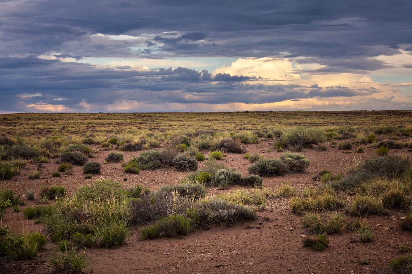 Petrified-Forest-National-Park-ABP-Grassland.jpg