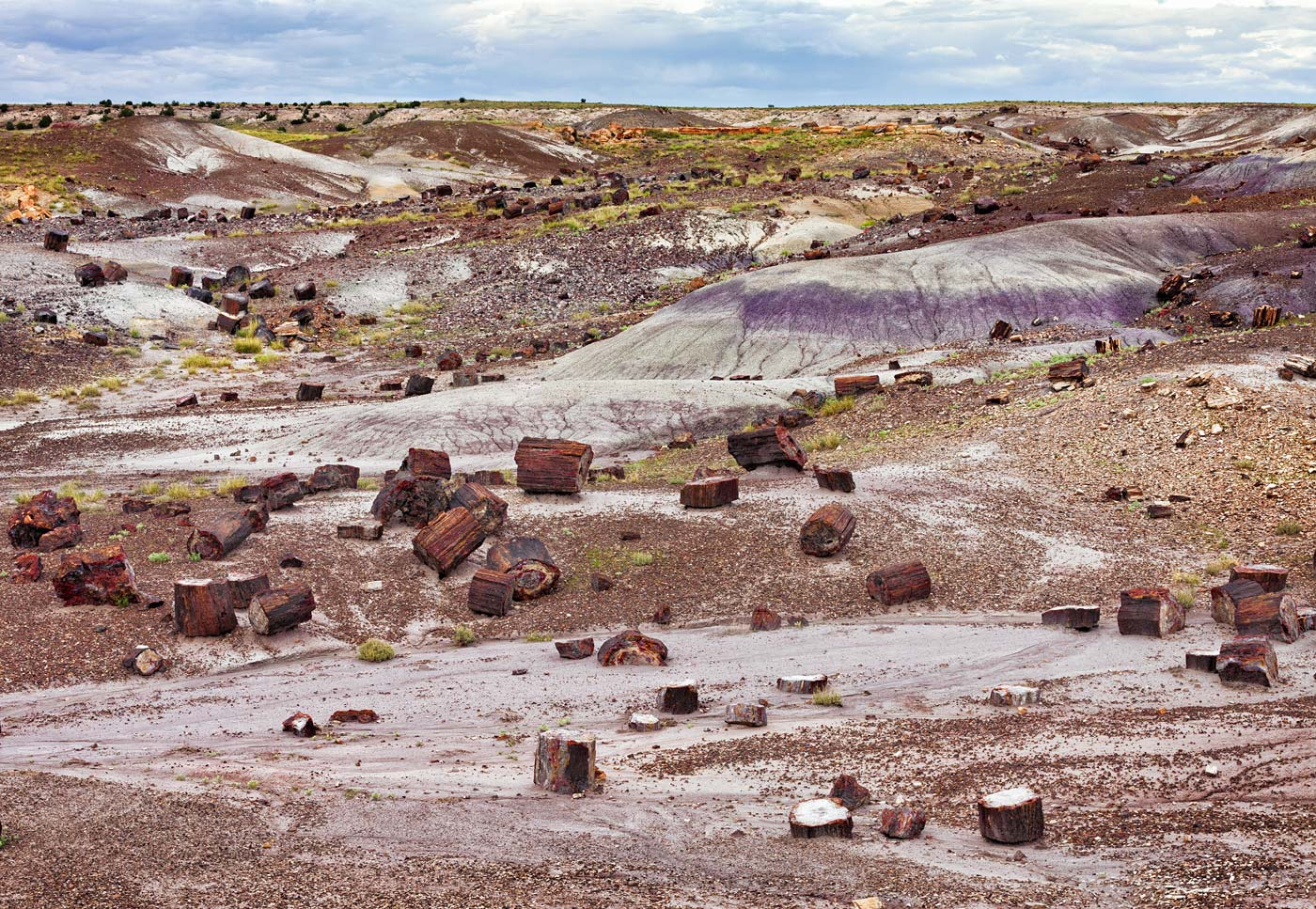Petrified-Forest-National-Park-ABP-Crystal-Forest.jpg