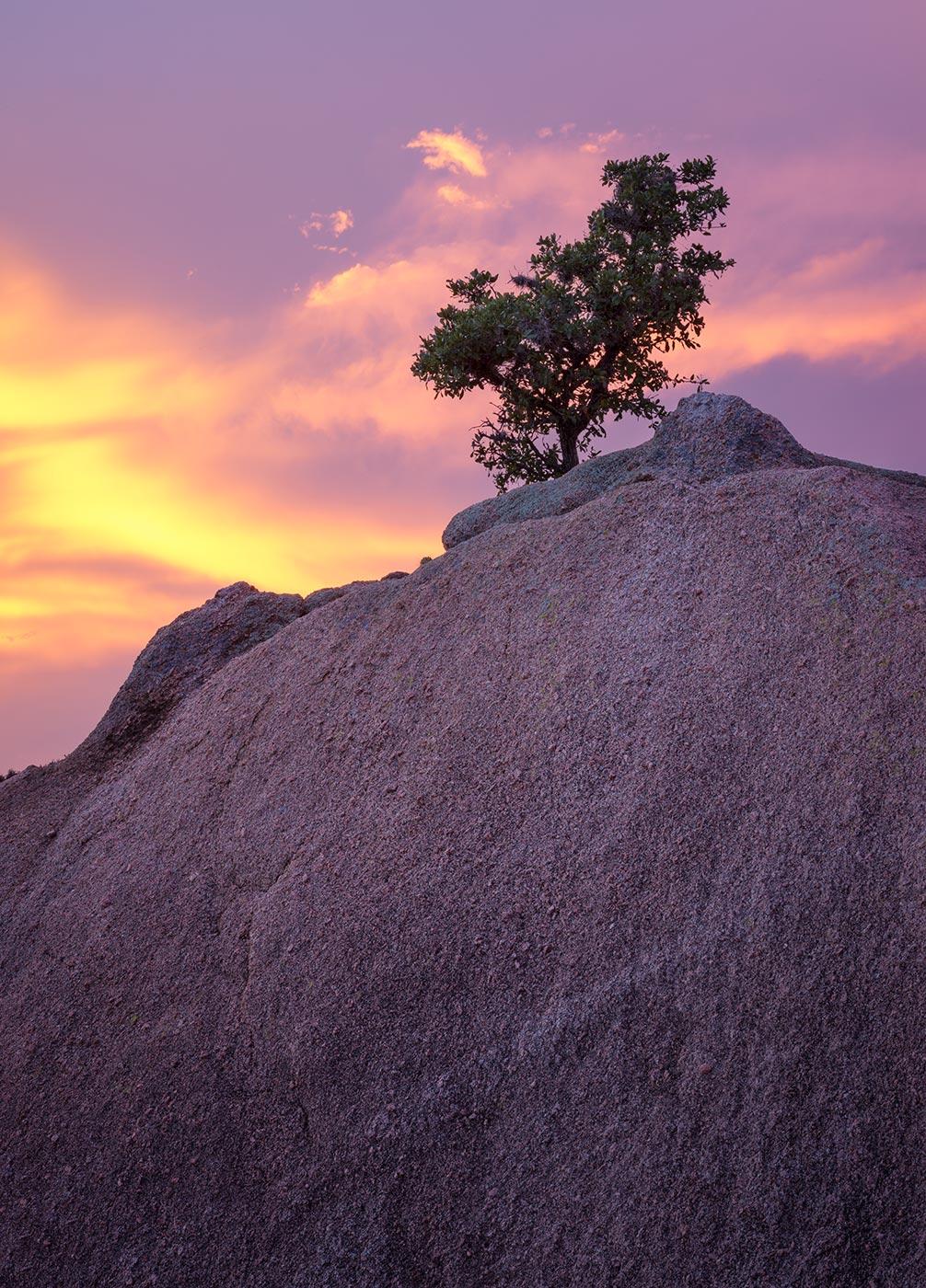 Enchanted-Rock-ABP-Boulder_tree.jpg