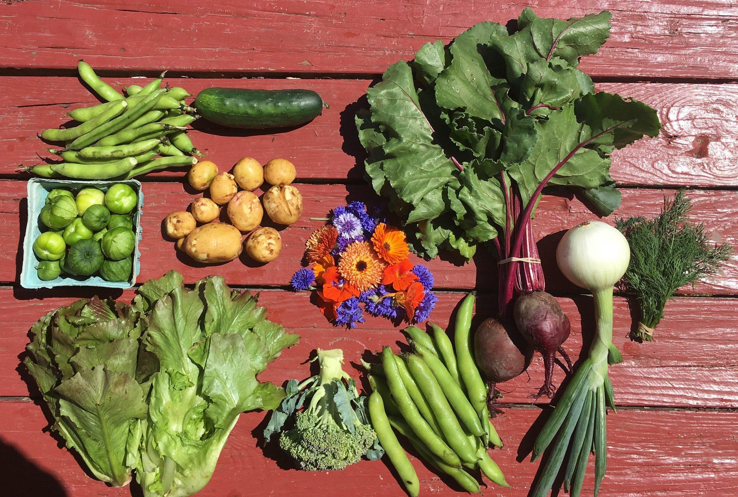 July - Bunching, braising, & salad greensCarrots, BeetsBroccoli, CabbageLettuce- head lettuce & salad mixHerbs- Basil & ParsleyBunched roots- Radish, TurnipOnions- red torpedo onion, sweet Walla WallasArtichokes, Watermelon