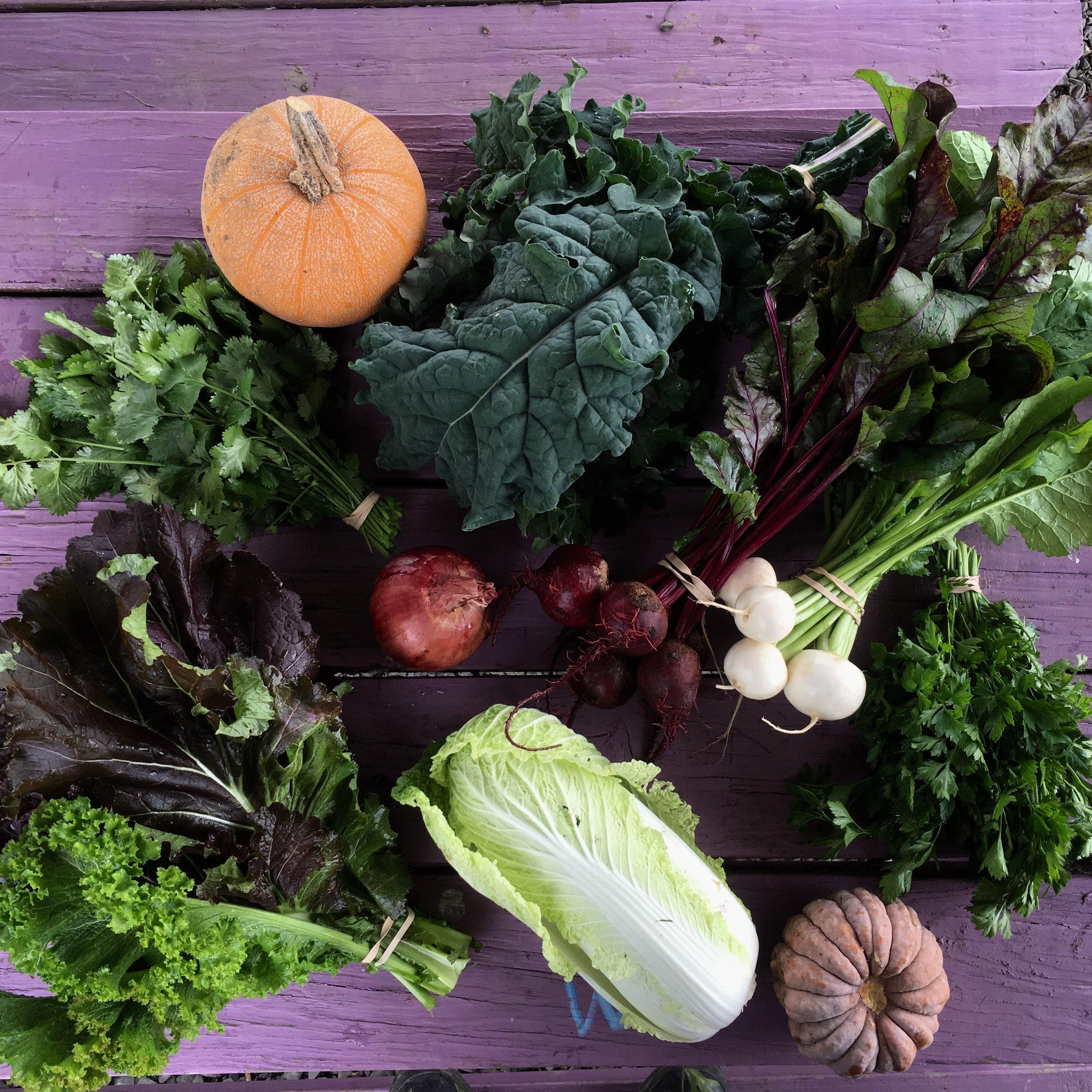 October - Bunching, braising, & salad greensBeets, Carrots, Radish, TurnipsCauliflower, Broccoli, CabbageCilantro, dill, & parsleyOnions- leeks, red storage onionsPeppers- hotPotatoesWinter squash- delicata, butternut, red kuri, kabocha, acorn, and morePumpkins- Pie pumpkins & carving pumpkins