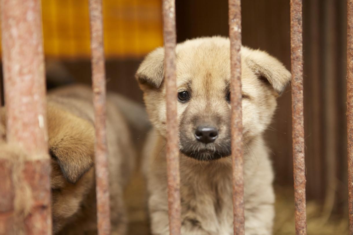 Korea-dog-meat-farm-rescue-1220x813.jpg