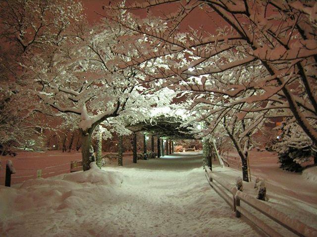 Love like winter ❄️