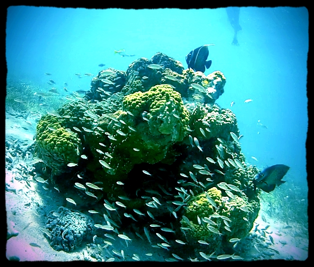 pretty reef.jpg