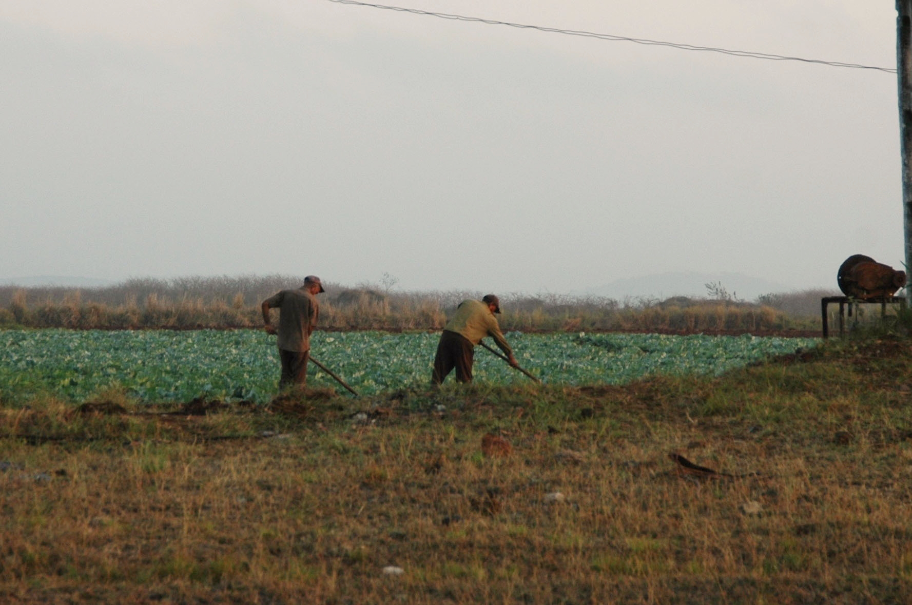 Tending the fields
