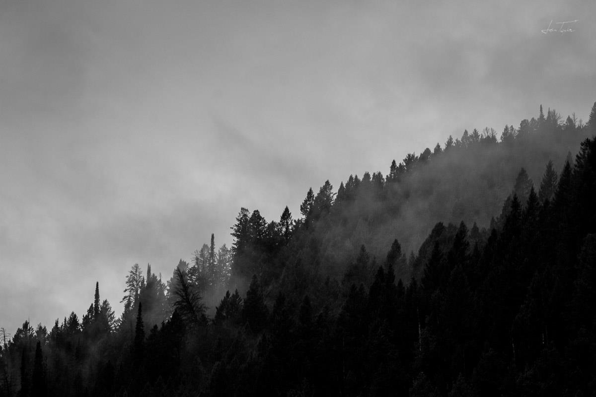 Teton Forest B&W - Wyoming