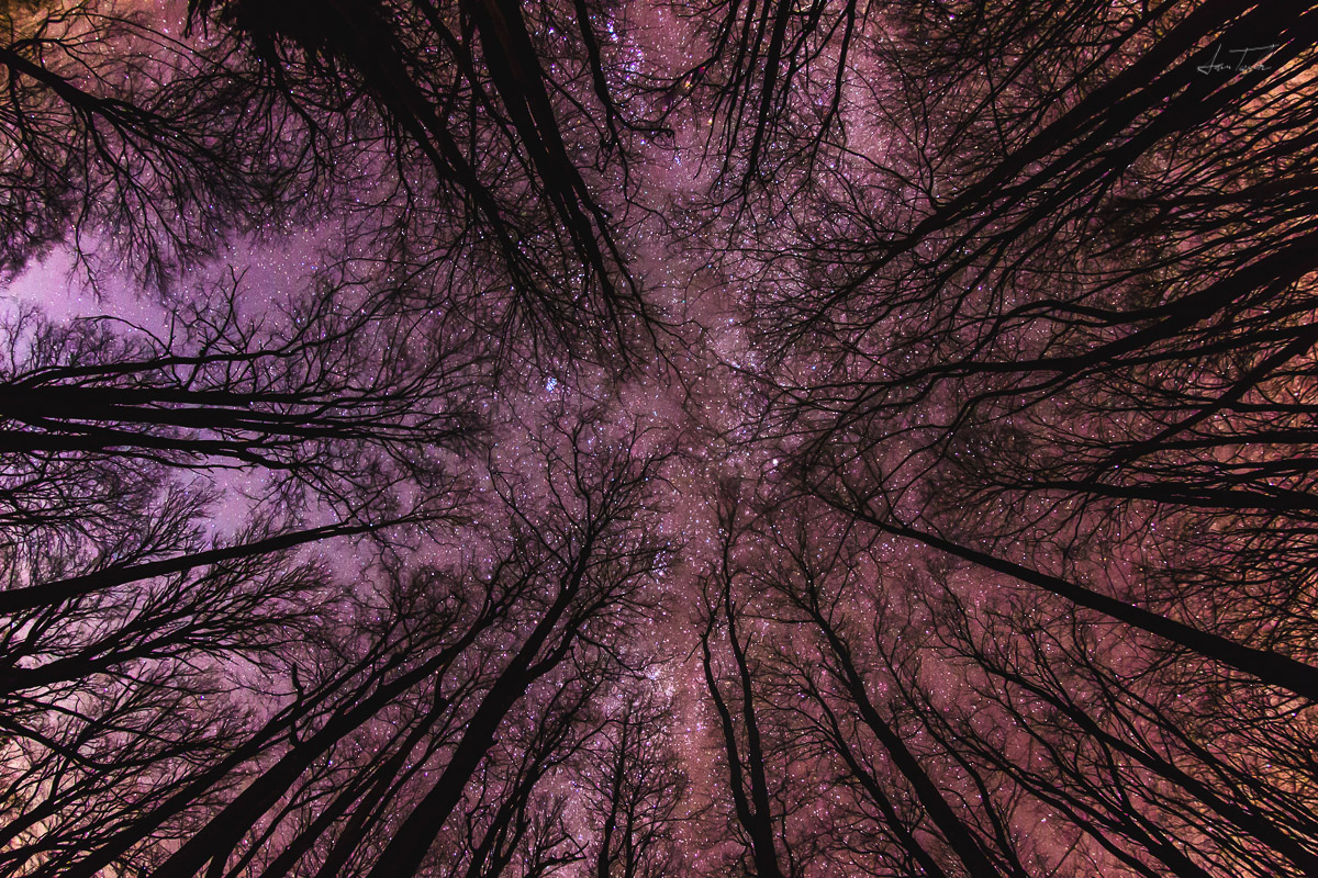 Starlight through Winter Forest (Blackwater Falls State Park) - West Virginia