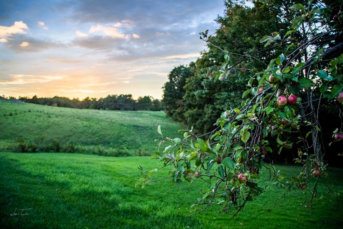 Antique Apples - West Virginia