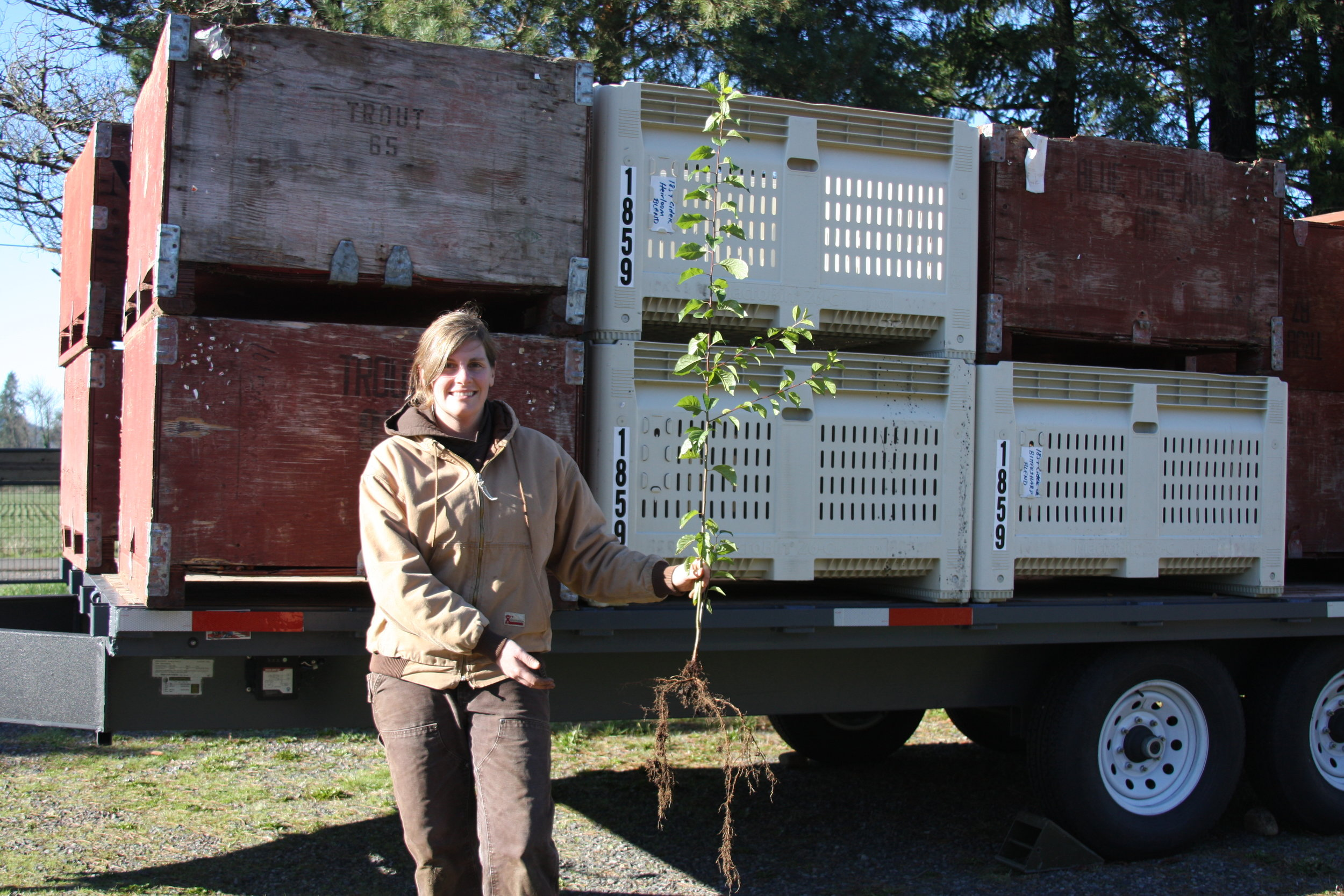 Some 1859 Cider Co. rootstock from our orchard -