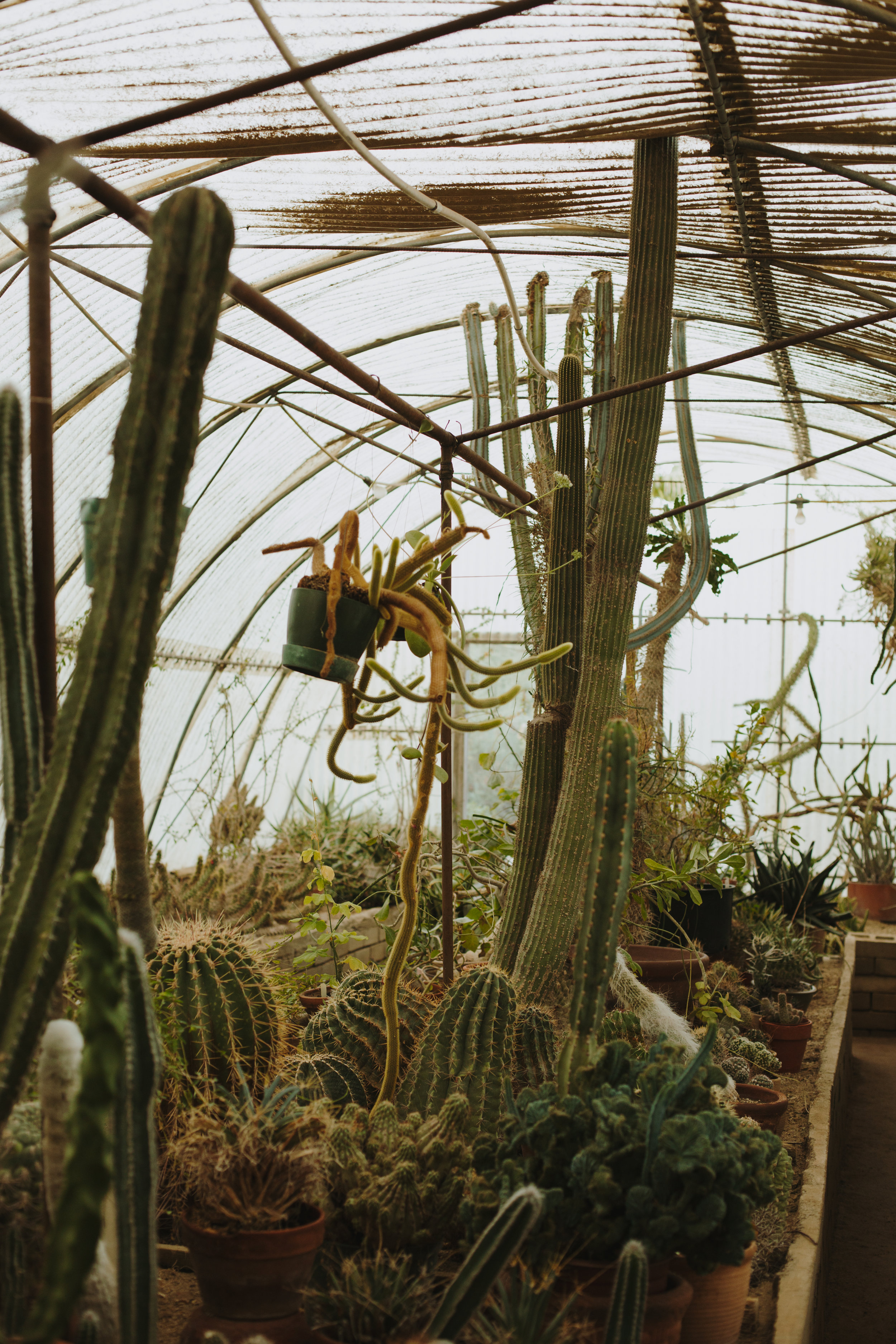 Moorten Botanical Garden - This family owned botanical garden not only features the first ever cactarium, but over 3,000 species of cacti and other desert plants. Wander around the garden or pick out your own cactus to take home.