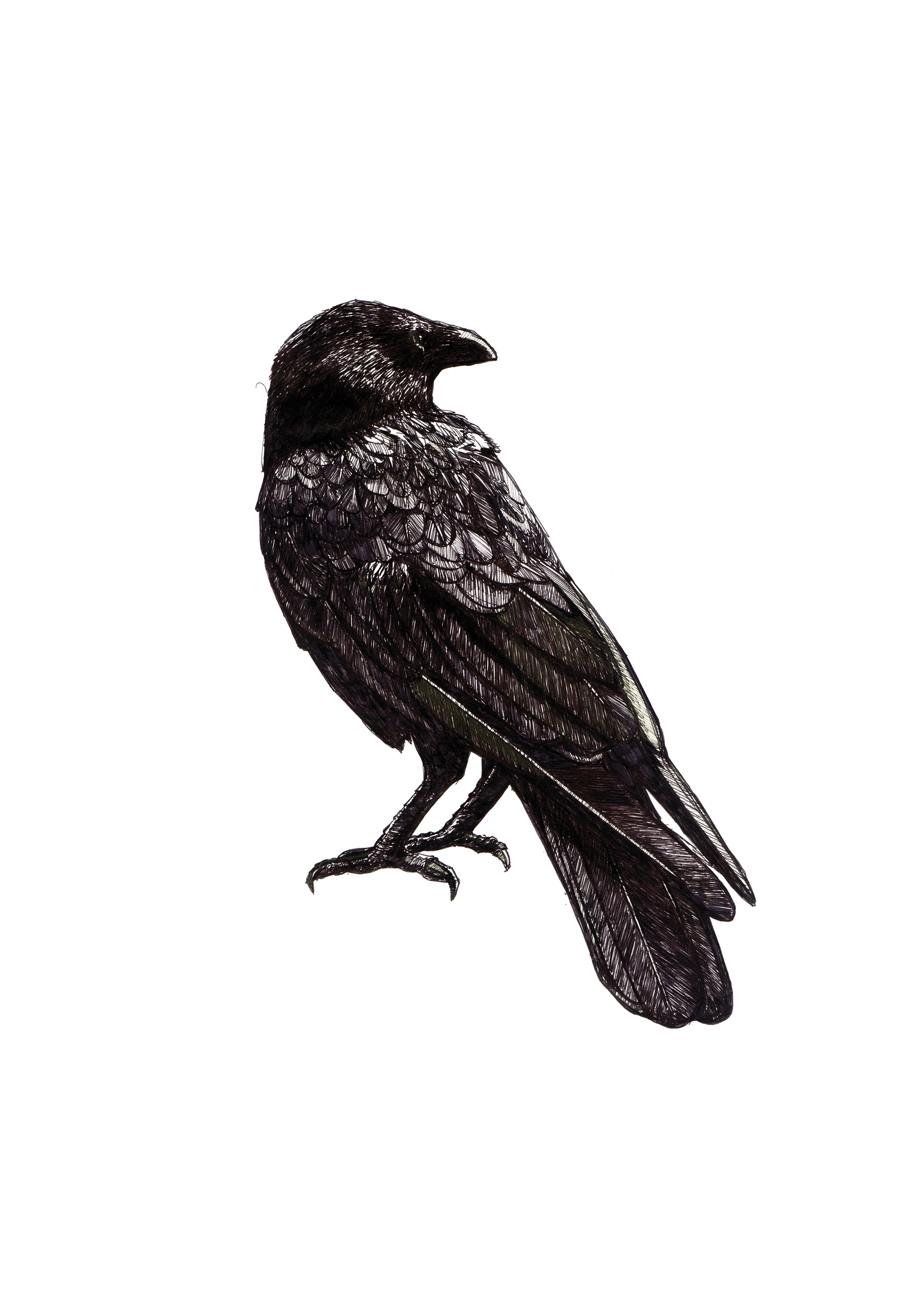 crow_scan_A4.jpg