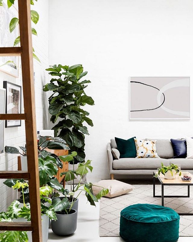 Being amongst a relaxing and comfortable space at home..that's how we like to roll on a weekend. 🙌🏼 Thanks for the inspo @huntingforgeorge Art direction @lucygladewright 📷 by @gemmola Plants by us. 🌿