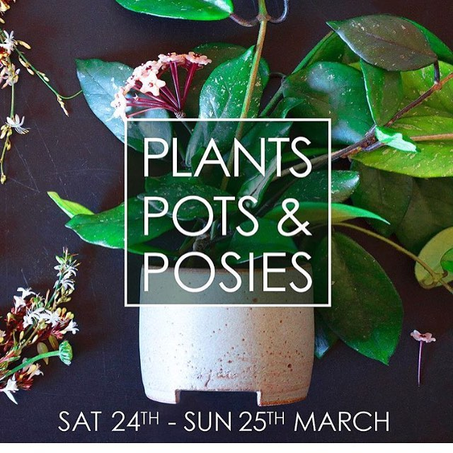 THIS WEEKEND ~ @seventhgallery 155 Gertrude St Fitzroy. 🌿✨ In collaboration with @sophiejanemoran and @wildflowerandtwig we will have loads of lush greenery, unique handmade ceramic planters and sustainably sourced fresh flowers on offer. Come down and say hi! 👋🏼 Sat 1-6pm & Sun 10-6pm. Don't forget the first 10 early birds on each day who purchase a plant receive a sexy semp plant free! 😁 . . . #mrfancyplants #plants #melbourne #melbournetodo #greenery #plantspotsandposies #melbourneevents #ceramics #flowers #event #botanicalpickmeup #botanical #plantgifts
