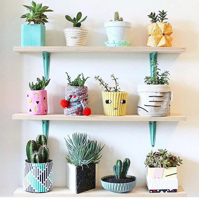 Really digging this impressive assortment of mini potted succulents ~ some great colour combos, potential inspiration for any last minute Easter Egg hunts! 📷 via @littlebigbell . . . #mrfancyplants #succulent #succulentlover #pastel #shelfie #plants #indoorplants #houseplants #indoorjungle #junglestyle #interiorrewilding #happyhouseplants #plantgang #plantstyling #succulove