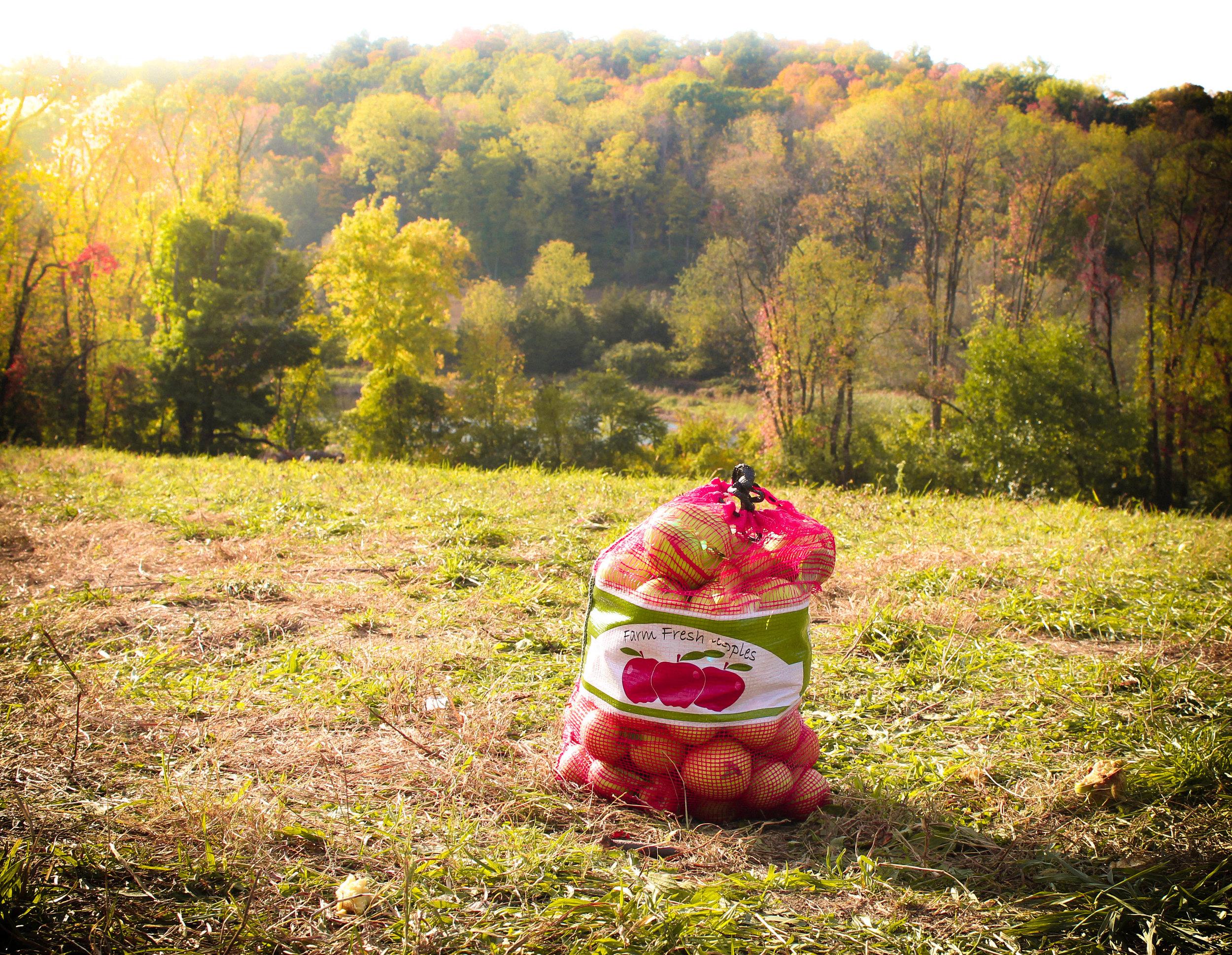 Apple Picking, Apple Farm