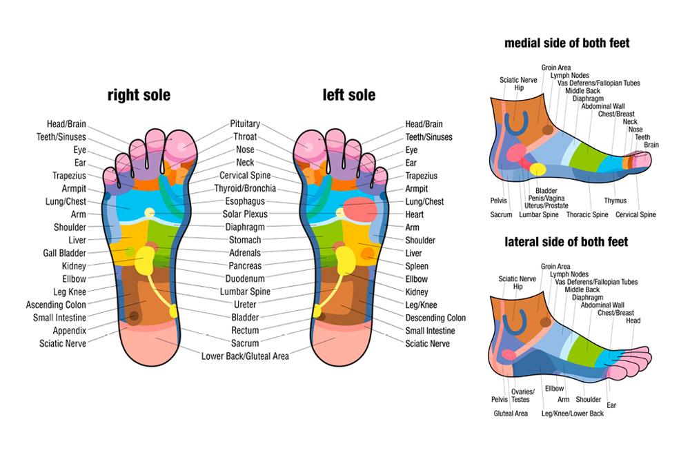 reflexology_chart_foot.jpg