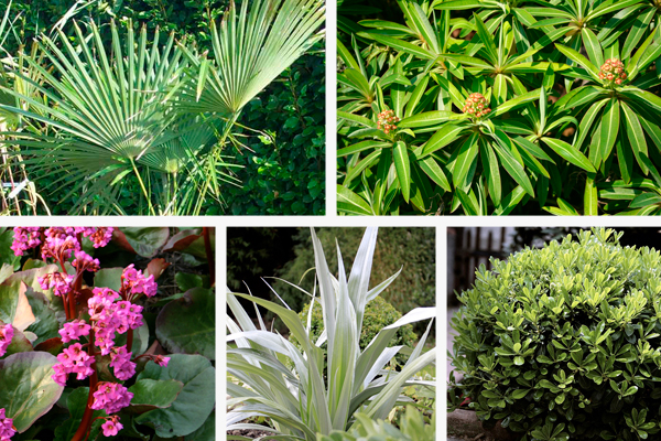 Exotic style plants