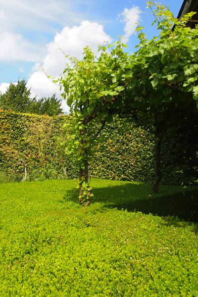 jardin-plume4.jpg