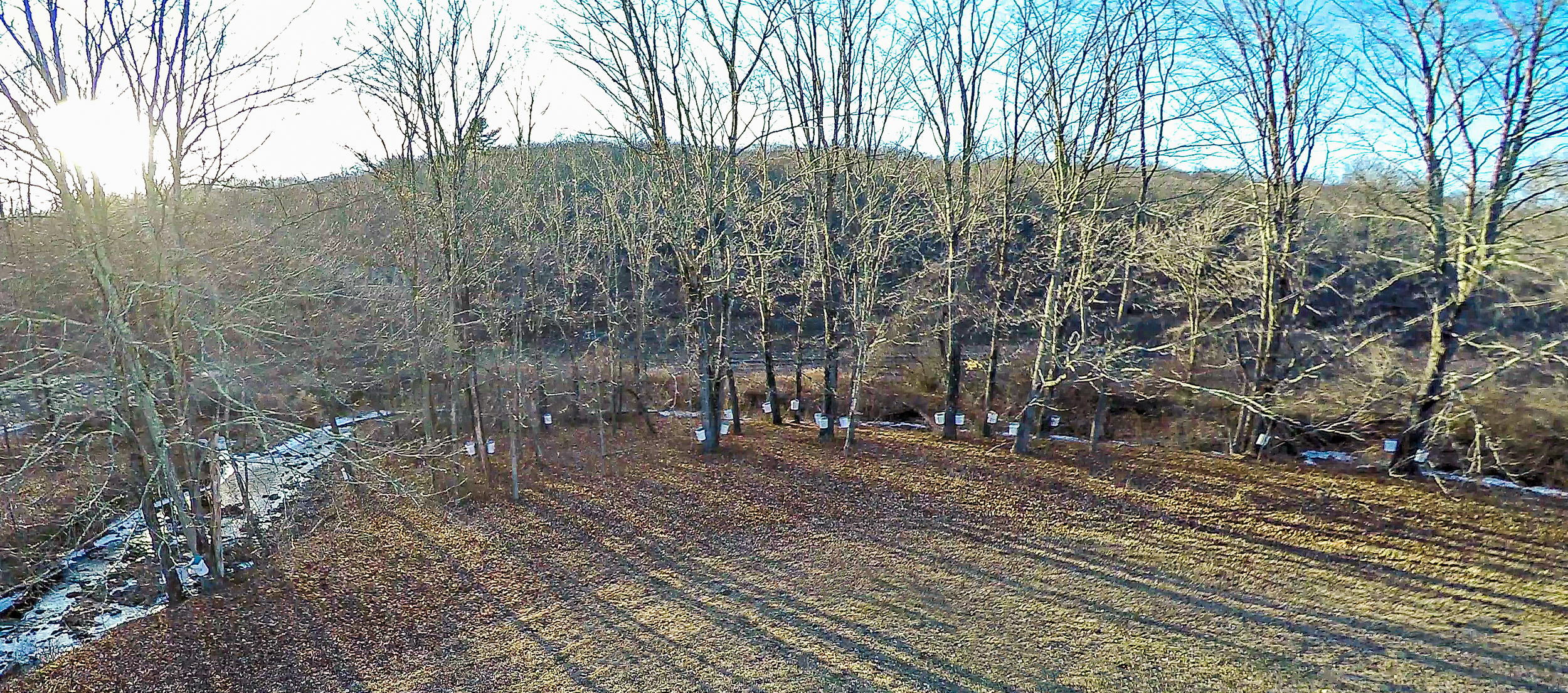 Sugar Bush, a gathering of sugar maples that are tapped and gathered to create the worlds best sweetner, our pure maple syrup.