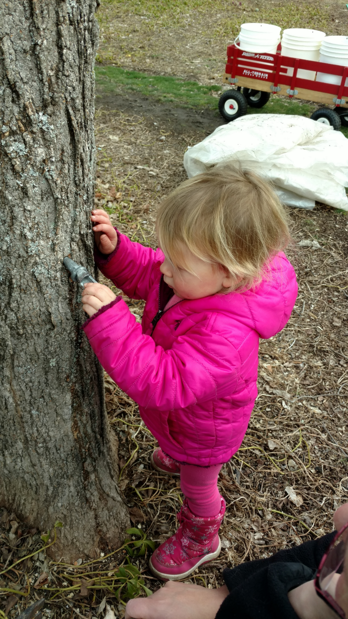 M tapping tree