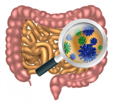 gut health:probioticts pic 2.jpg