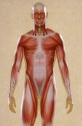 Muscle Image.jpg