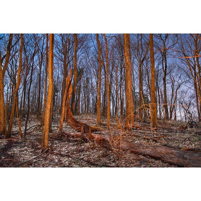 "New image from The Thru Project Book. --- Locust ll. Virginia, The Appalachian Trail. --- Head over to www.thru-at.com to check out The Thru Project Book.  Book package includes: - First Release Book (#'d & Signed) - 2 Limited Edition 8"" x 10"" Prints - Free (US) Shipping! ⚡️⚡️⚡️ #thethruproject #thethruprojectbook #appalachaintrail #thruhike #joshuanivenstudios #thewandertrees #locustknob #virginia"