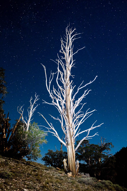 redwoodtrip-4636.jpg