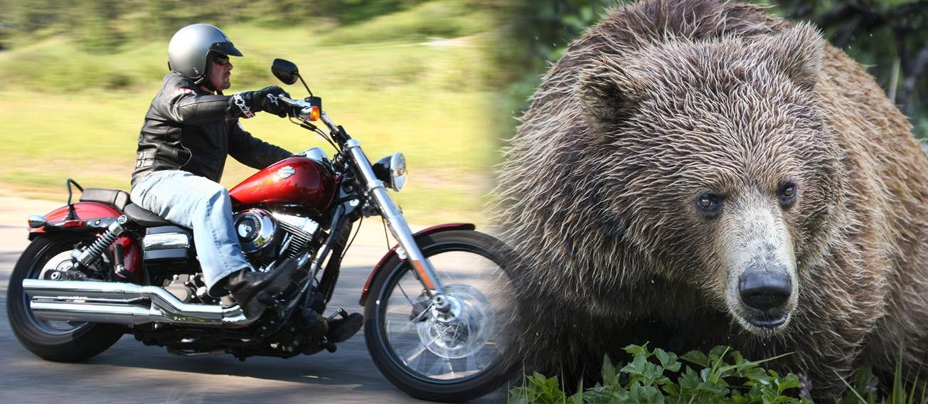 harley-and-bear-Cmpst.jpg