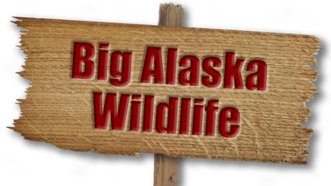 R-Big-Alaska-Wildlife.jpg