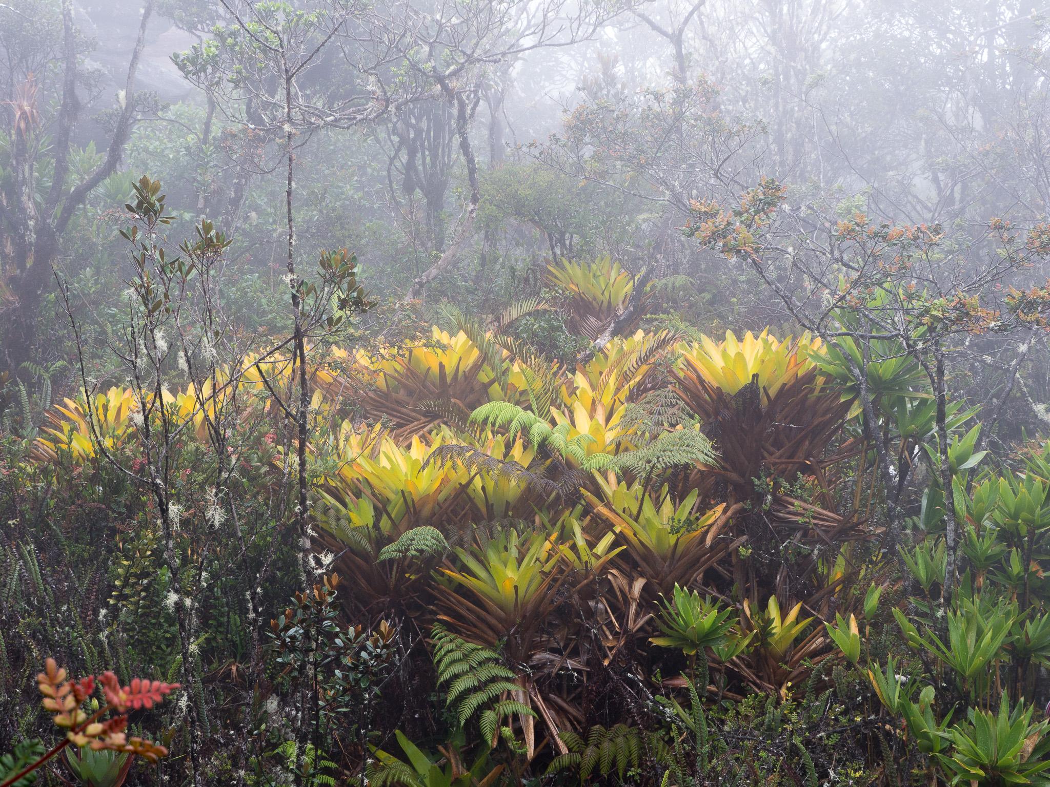 34-Venezuela-0455-P-1304.jpg