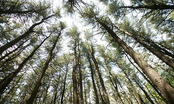 LowdenMillerStateForest.7421.E.360600.jpg