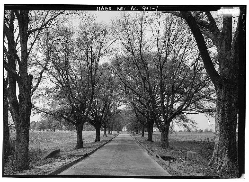 This 1991 photograph by Jet Lowe of the oak lined lane is only photograph showing the Jemison Center in the HABS record. Reproduced here as it is in the public domain.