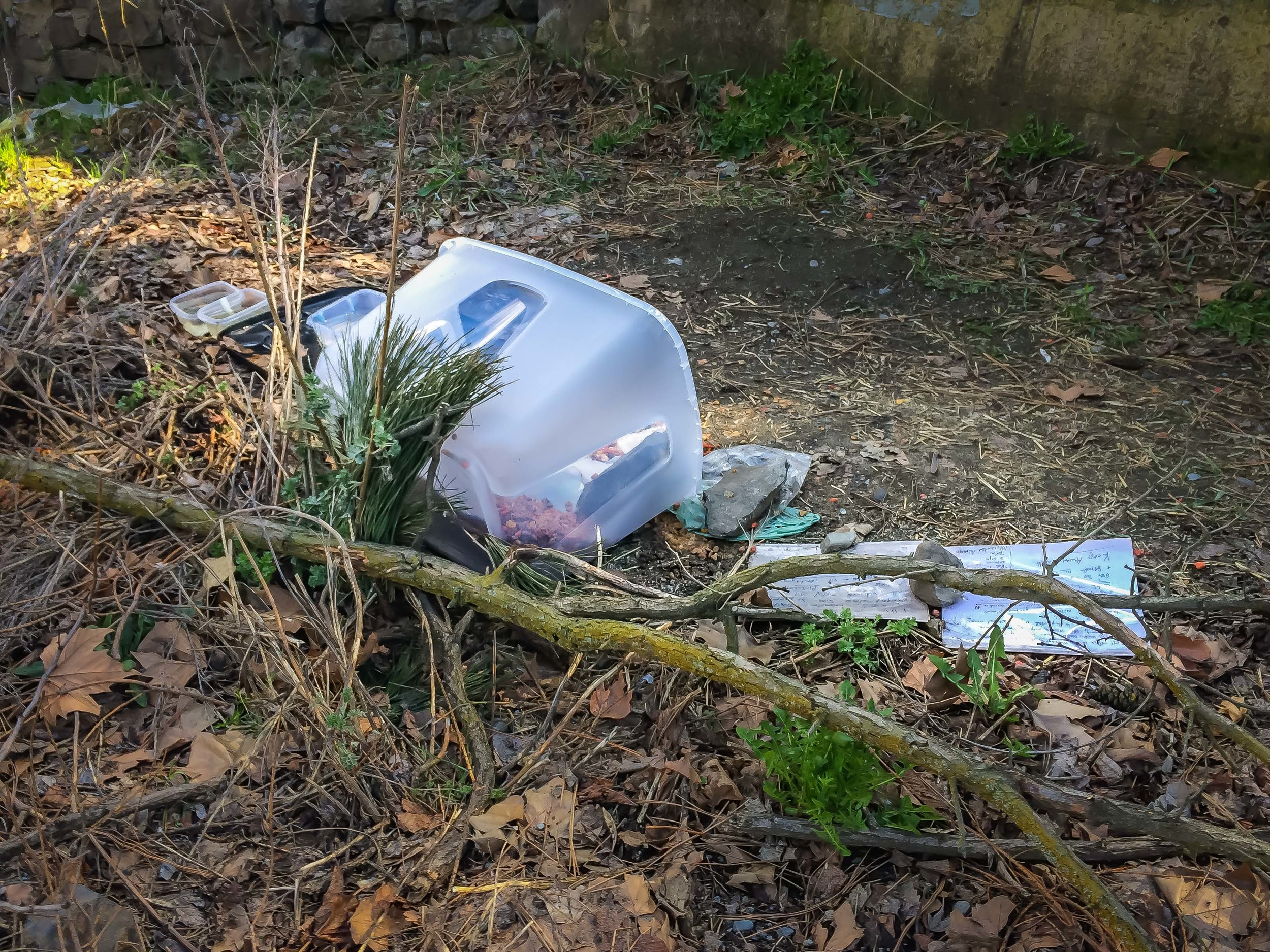 Someone has created a feeding area for stray cats .... and racoons and rats and opposums.