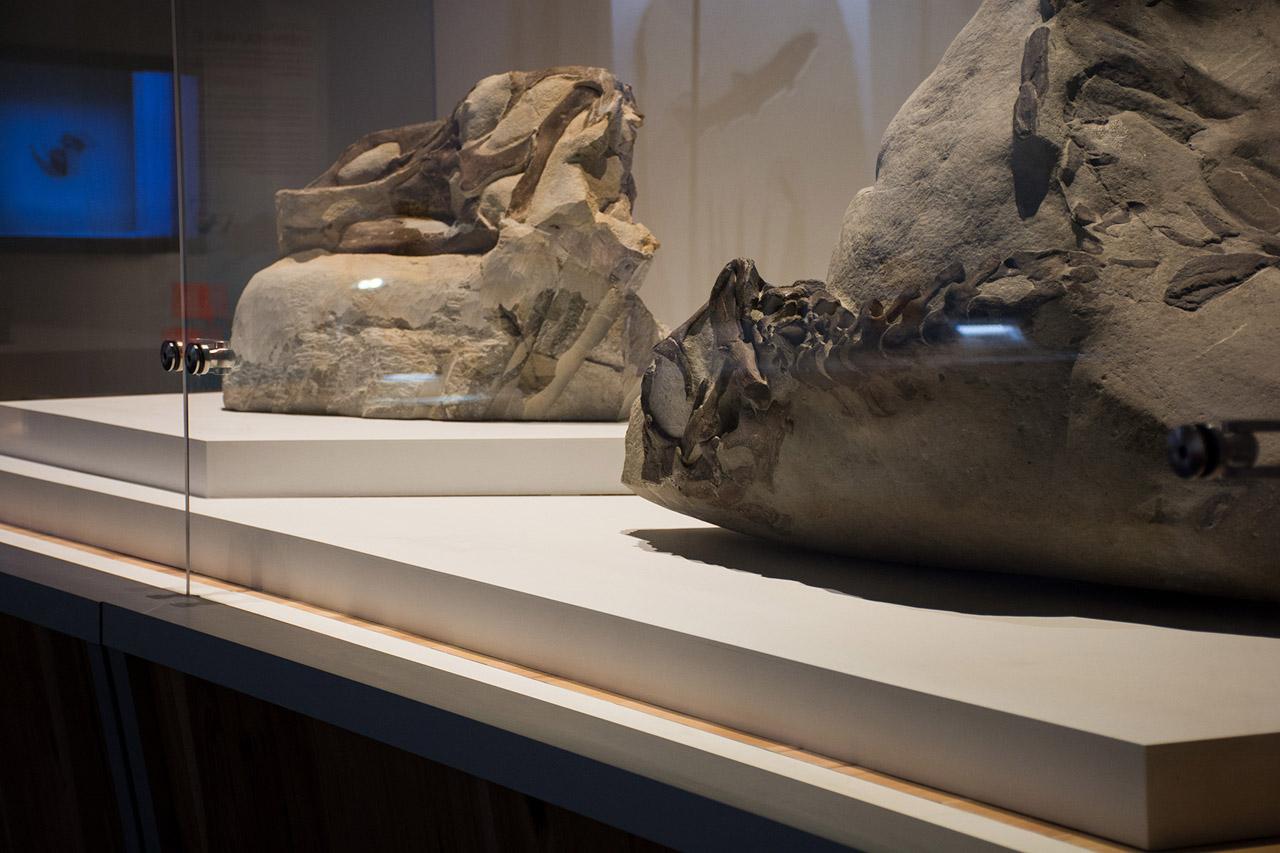 EDIT_hadrosaurs_07.jpg