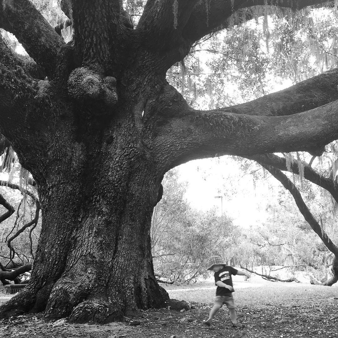 kid-tree.jpg