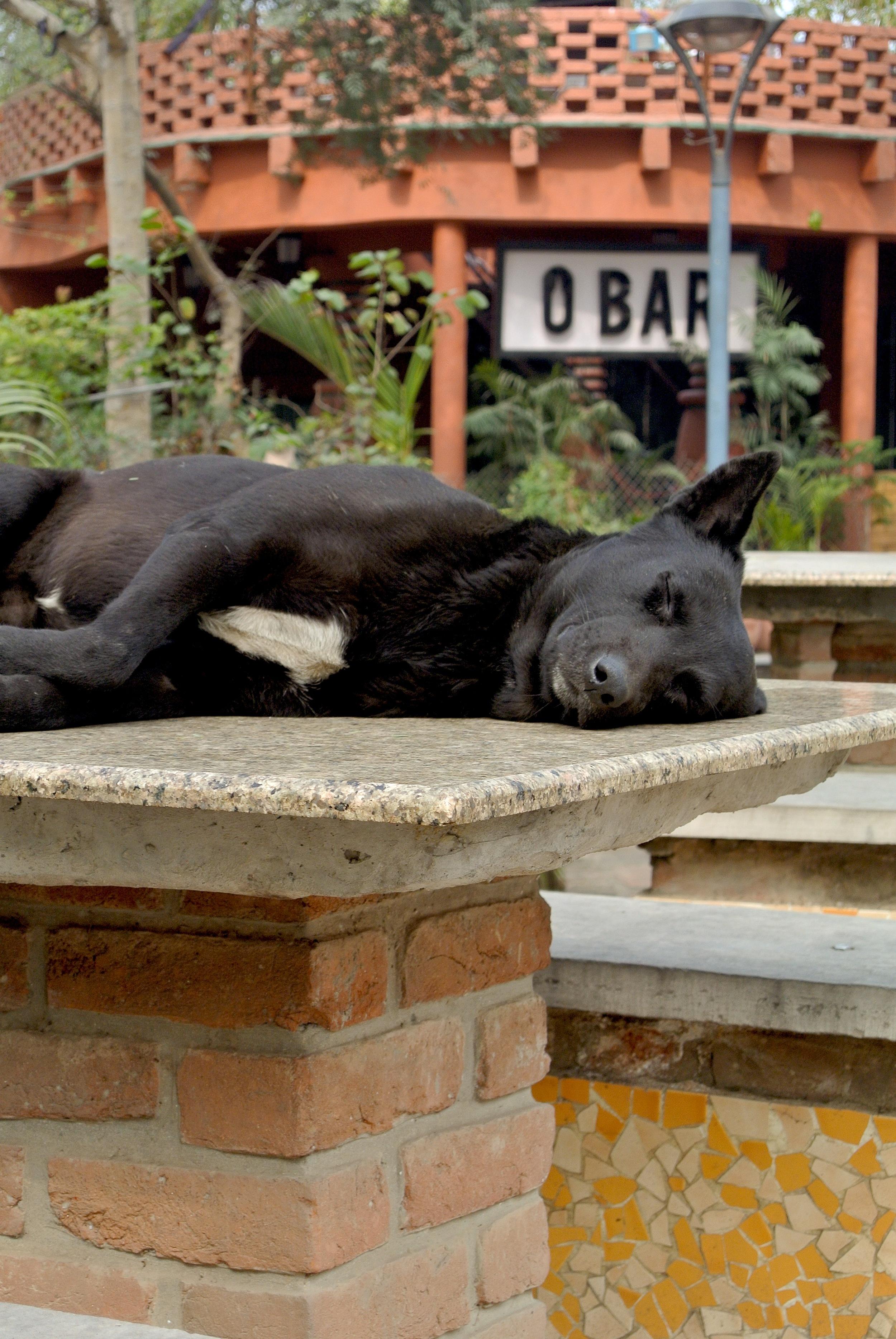 A stray dog sleeps atop a table in the Garden of Five Senses