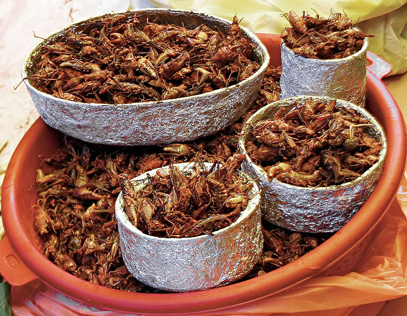 Crickets are popular snacks all over Thailand