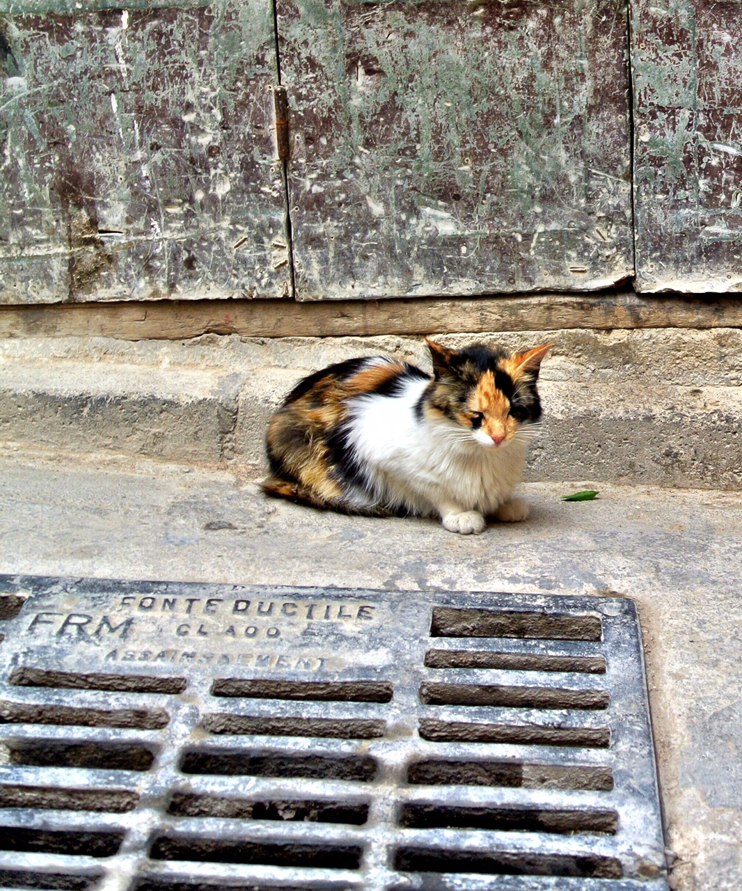 catsewer.JPG