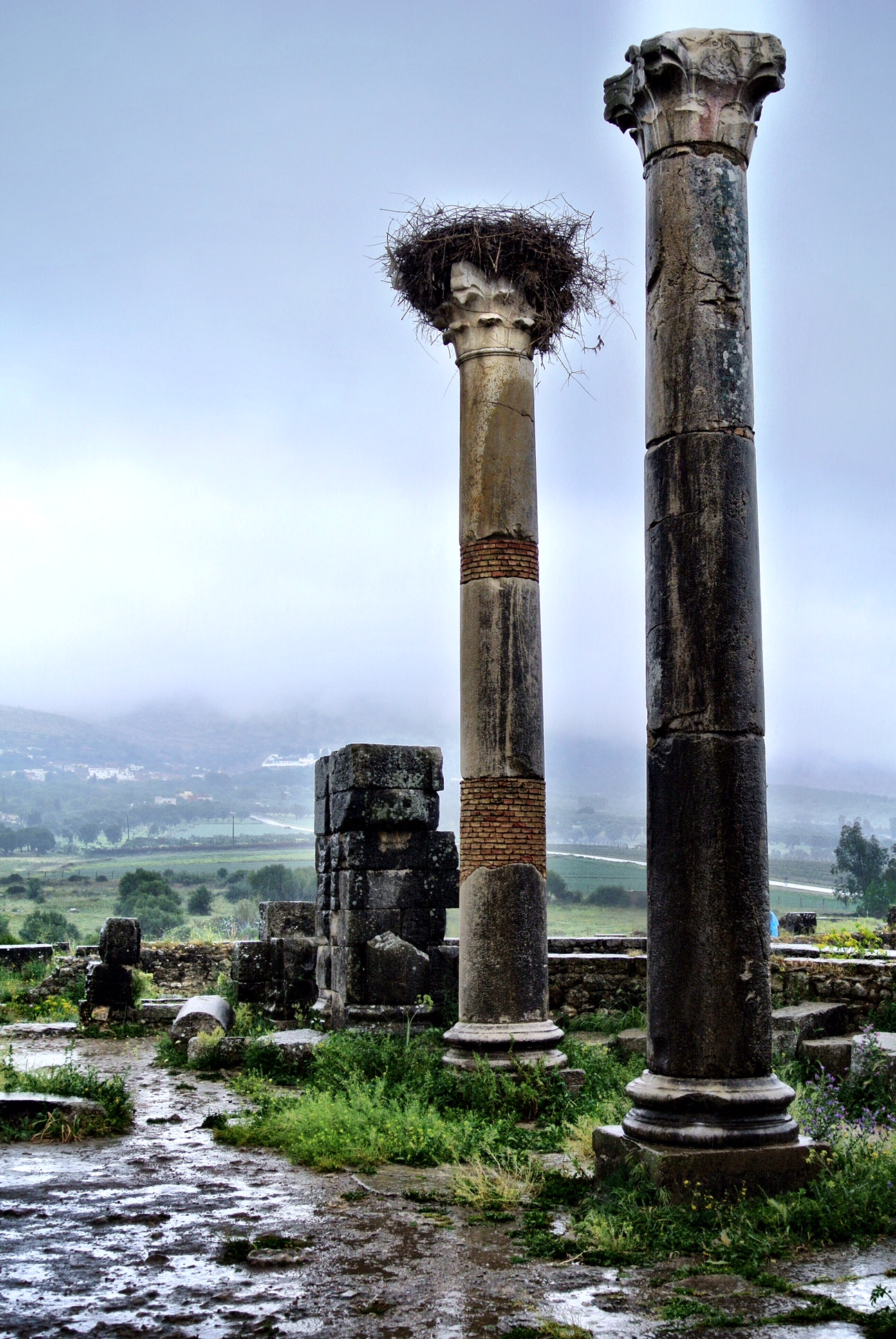The stork nests atop columns at the remains of the forum of Volubilis have become a tourist favorite