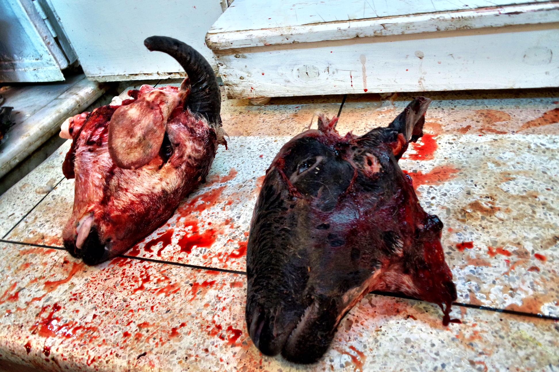 лучшие фотографии животных со скотобоен поэтому материал