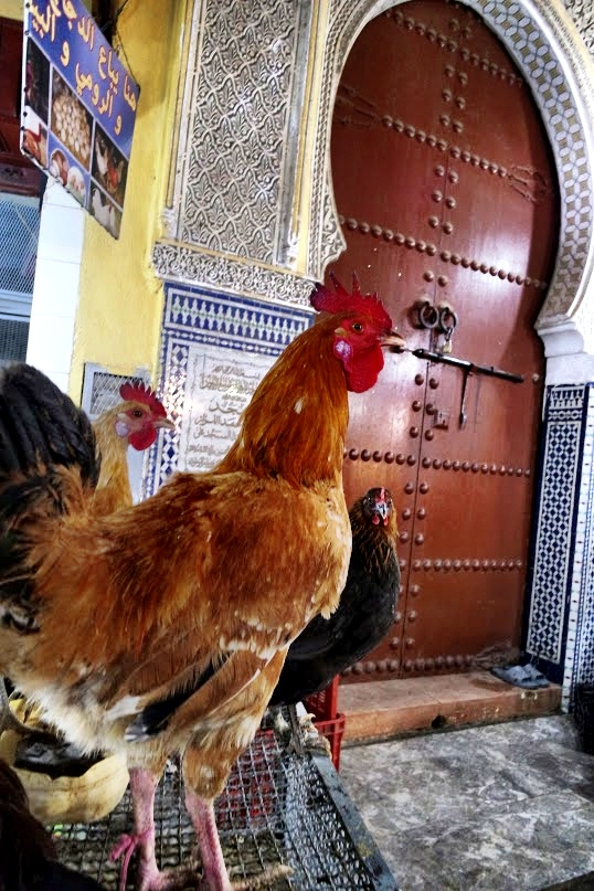 You never know what lies around the next corner in Fès. It might be a bunch of roosters tied to a cage in front of a gorgeous doorway