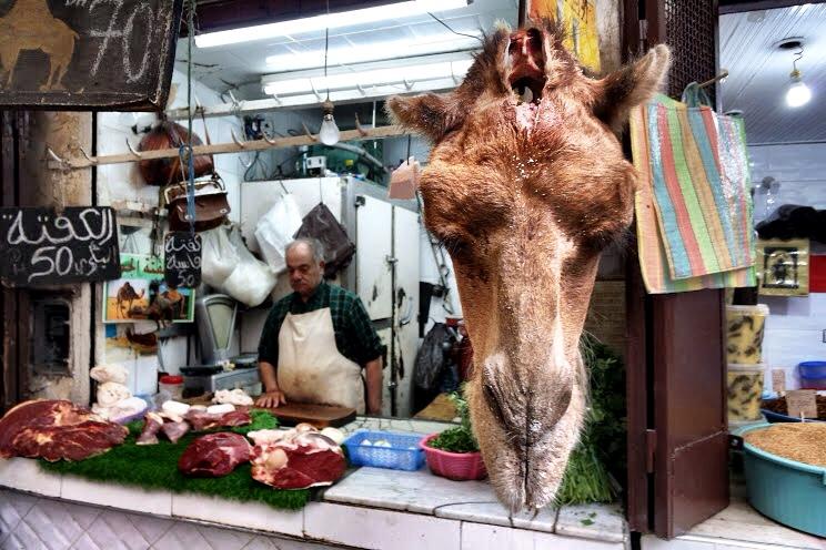 camelhead.JPG