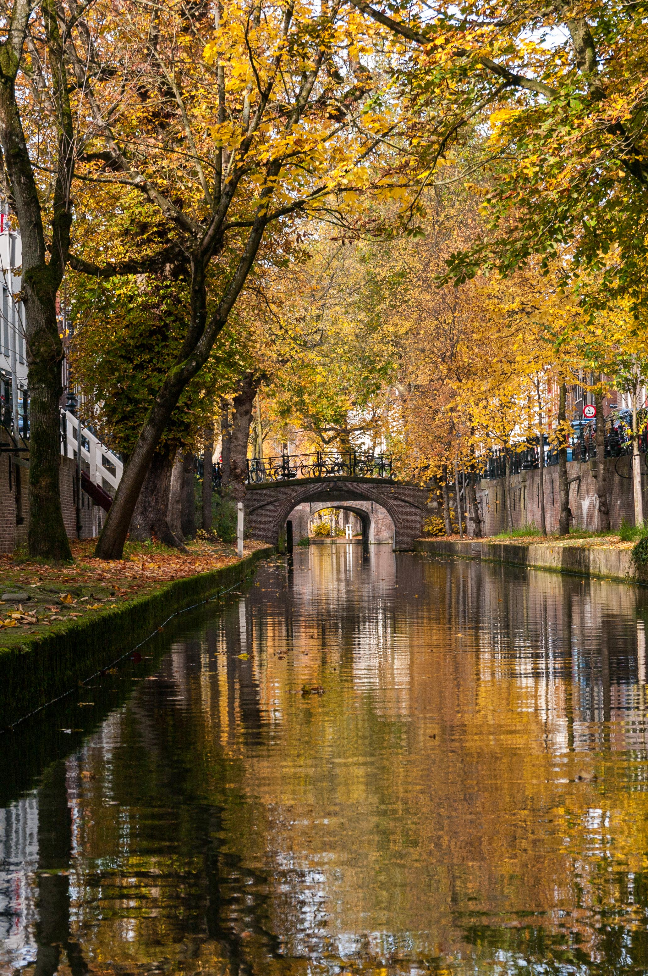 The gorgeous fall foliage along the edge of the canal in Utrecht, Netherlands