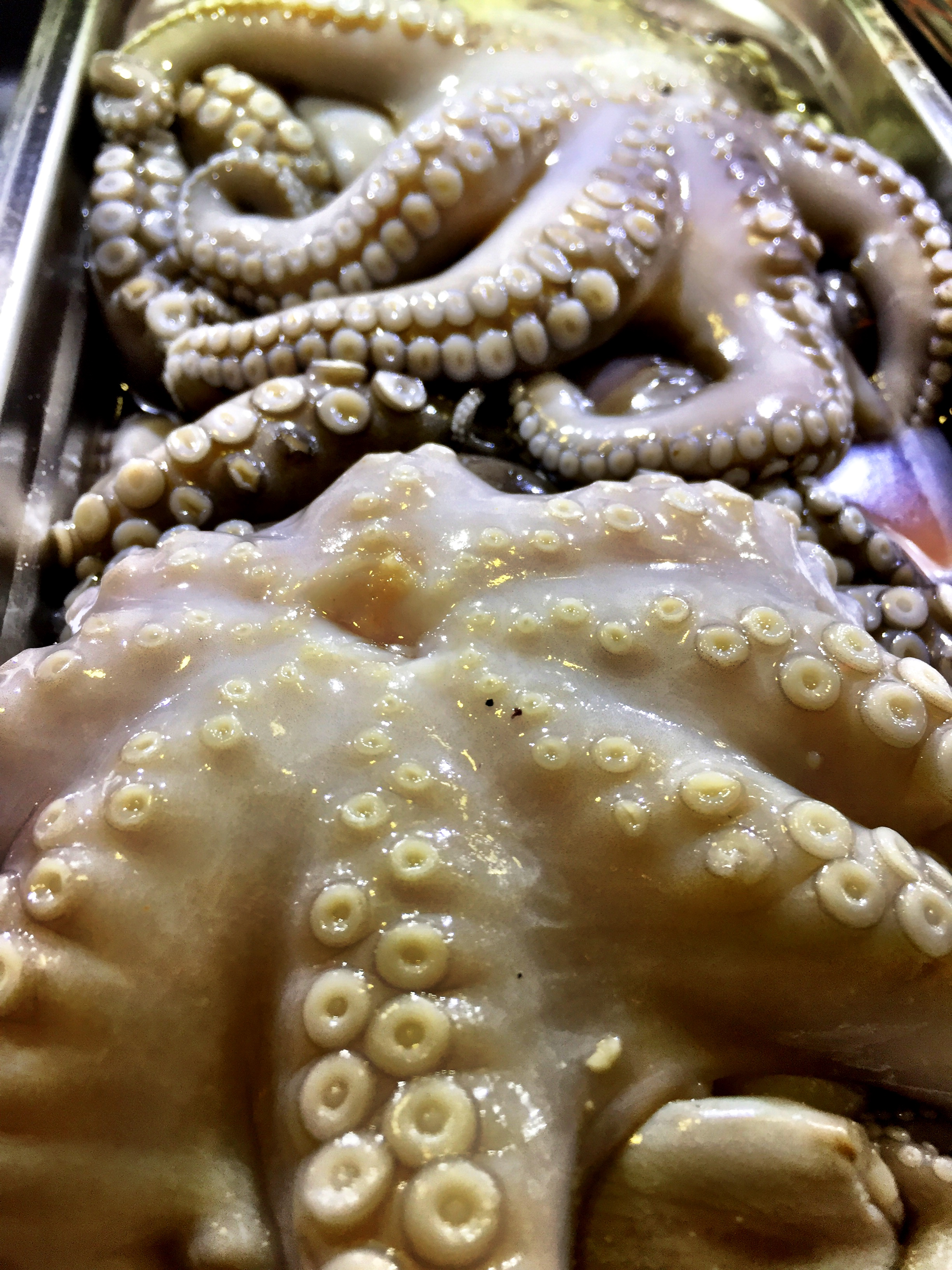 Who's in the mood for octopus?