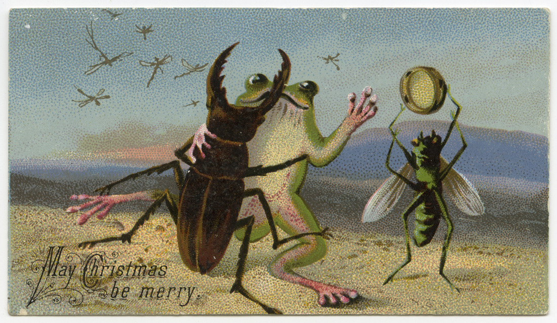 insectsfrogbeach.jpg