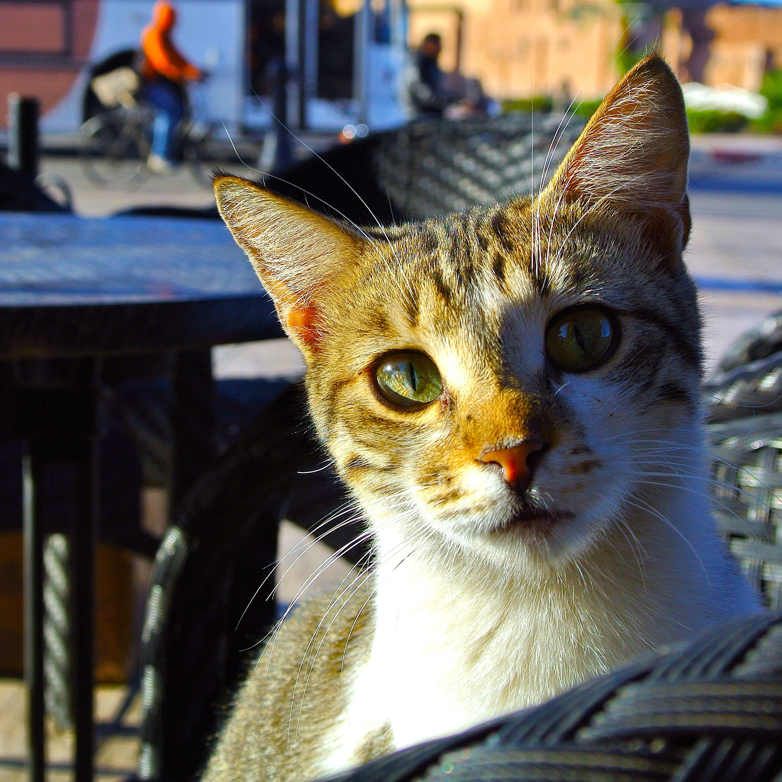 19.  Kittens and cats are a common sight among the streets of the Marrakech Medina in Morocco, indifferent to the activity around them. This little guy came to visit while we were sitting having coffee.