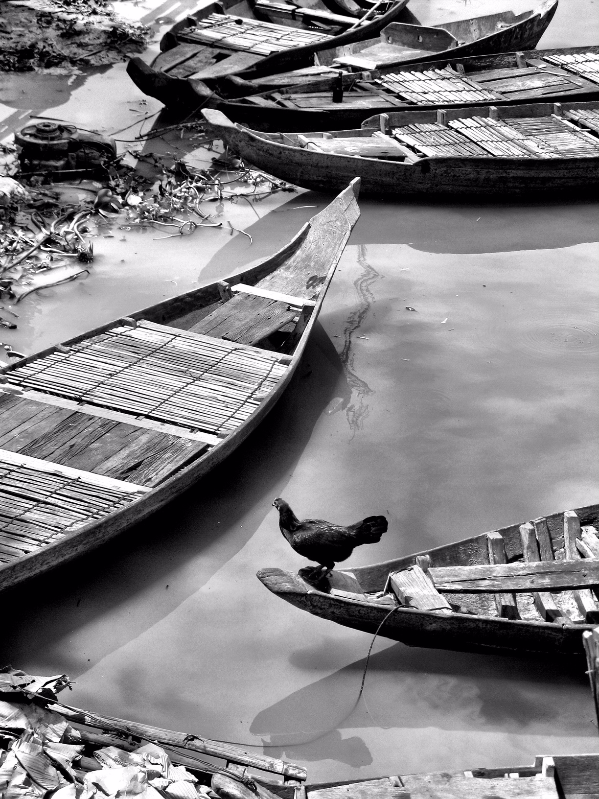 roosterboat.jpg