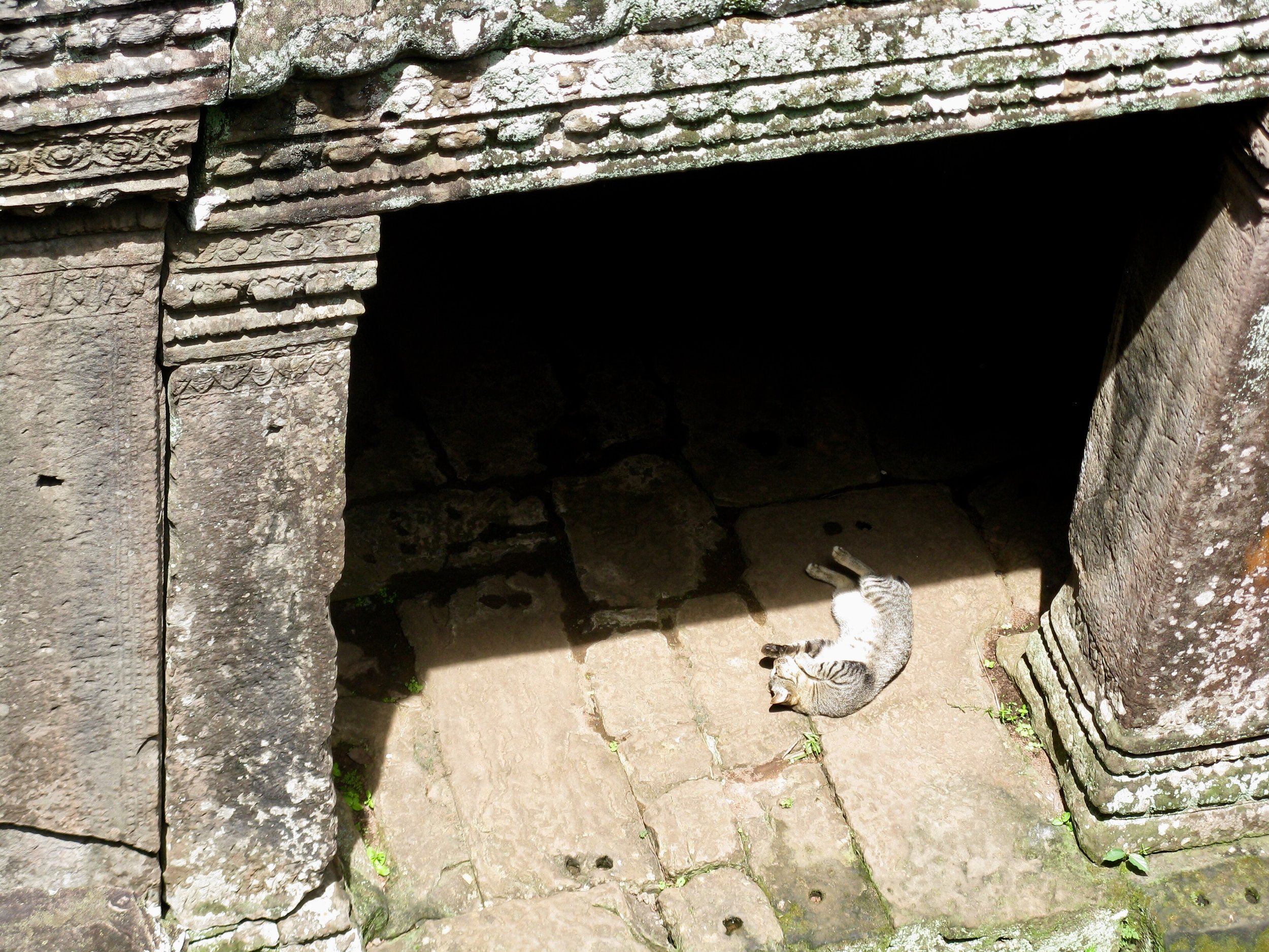 Prasat Bayon is the purrfect place for a catnap